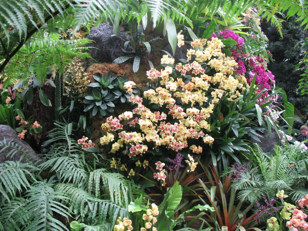 nybg_Show designer Christian Primeau has layered plantings to great effect, combining orchids with bromeliads, fern