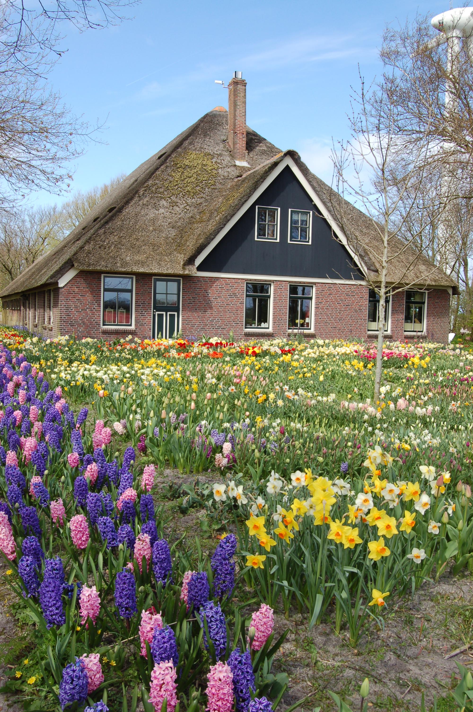 Spring Bulbs White Flower Farms Blog