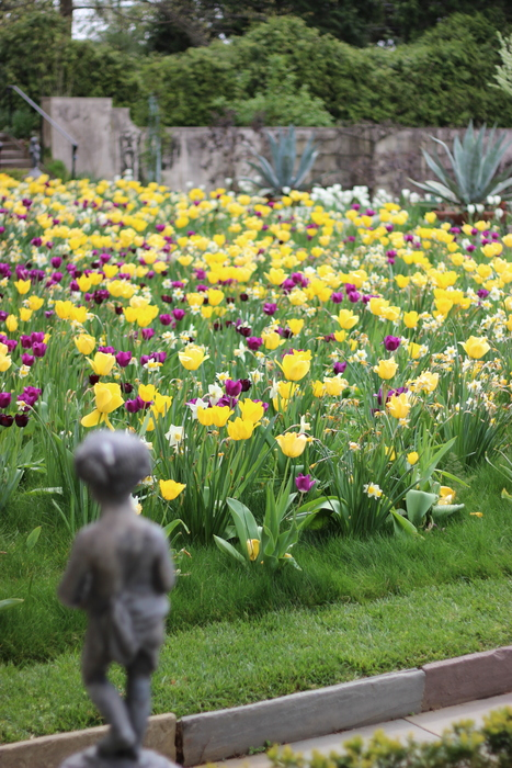Tulips and Narcissus blooming together at Chanticleer.