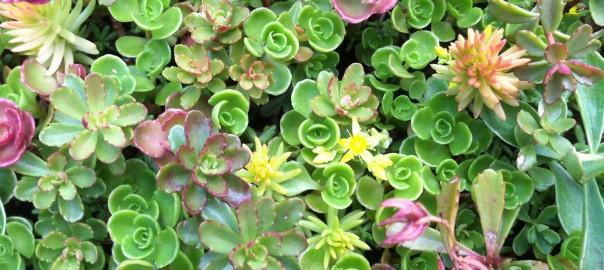 Shade garden white flower farms blog category archives shade garden mightylinksfo