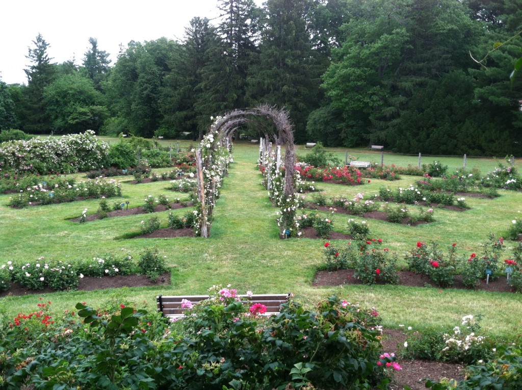3. The Rose Garden contains more than 800 varieties of roses, a mix of old and new that includes a broa