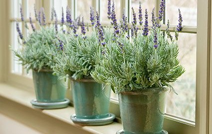 Indoor plants white flower farms blog a video series on houseplants mightylinksfo Choice Image
