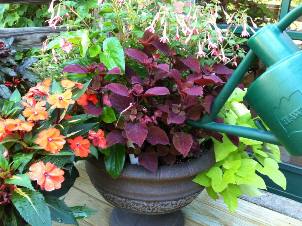 watering_container pots should be checked daily during the hottest weather