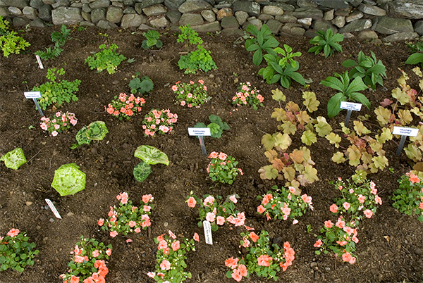 Here's-what-one-shade-garden-looked-like-in-early-spring