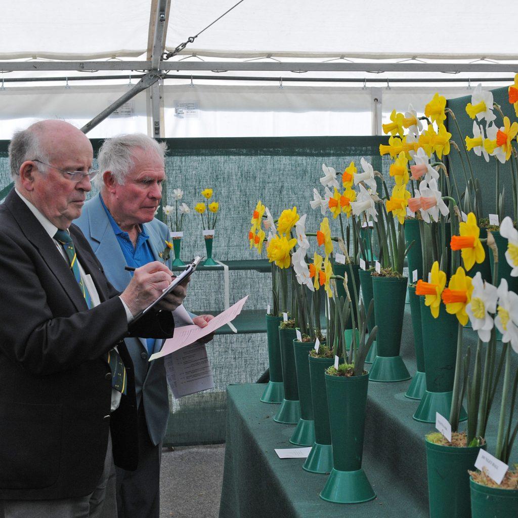 9. breeding daffs_Pic 9 Judging Daffodils