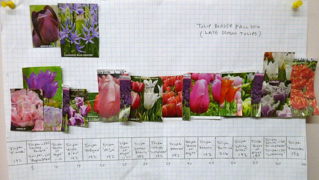 bulb planting plan