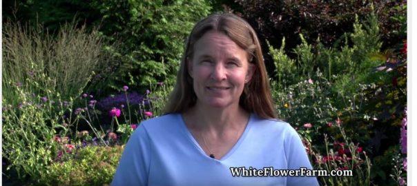White flower farm white flower farms blog page 3 all posts by white flower farm mightylinksfo Gallery