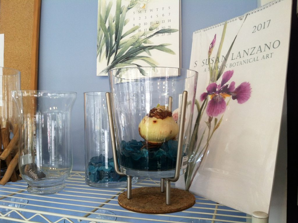 Forcing Bulbs in Glass