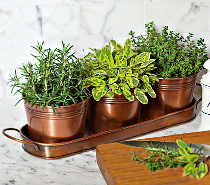 Cook's Herb Trio