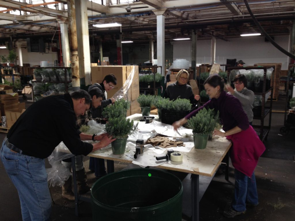 All hands on deck. Members of our staff who work in Publications, Marketing, and Finance joined forces with the Shipping Crew to take advantage of a window of warm weather for shipping tender plants.