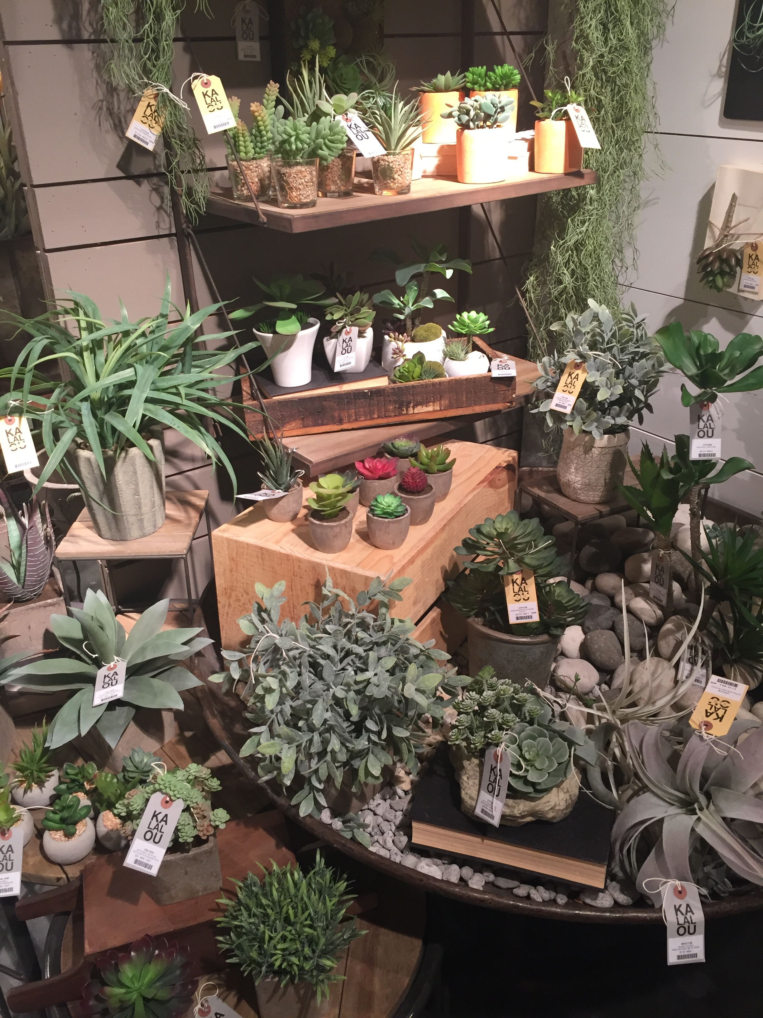 succulents_holiday-in-atlanta_2017-01-11-14-41-37-copy