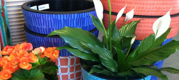 5-colorful-pots_on-wheels-for-indoors-or-out