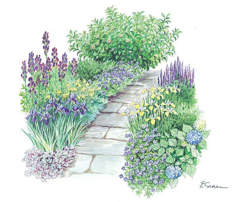 Plant perennials along the path