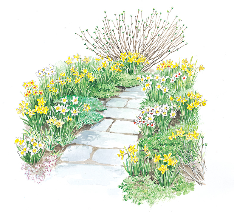 Make a Path with The Works Daffodils