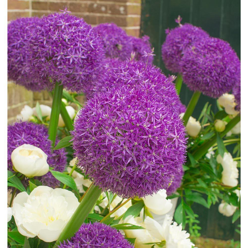 Perennials White Flower Farms Blog