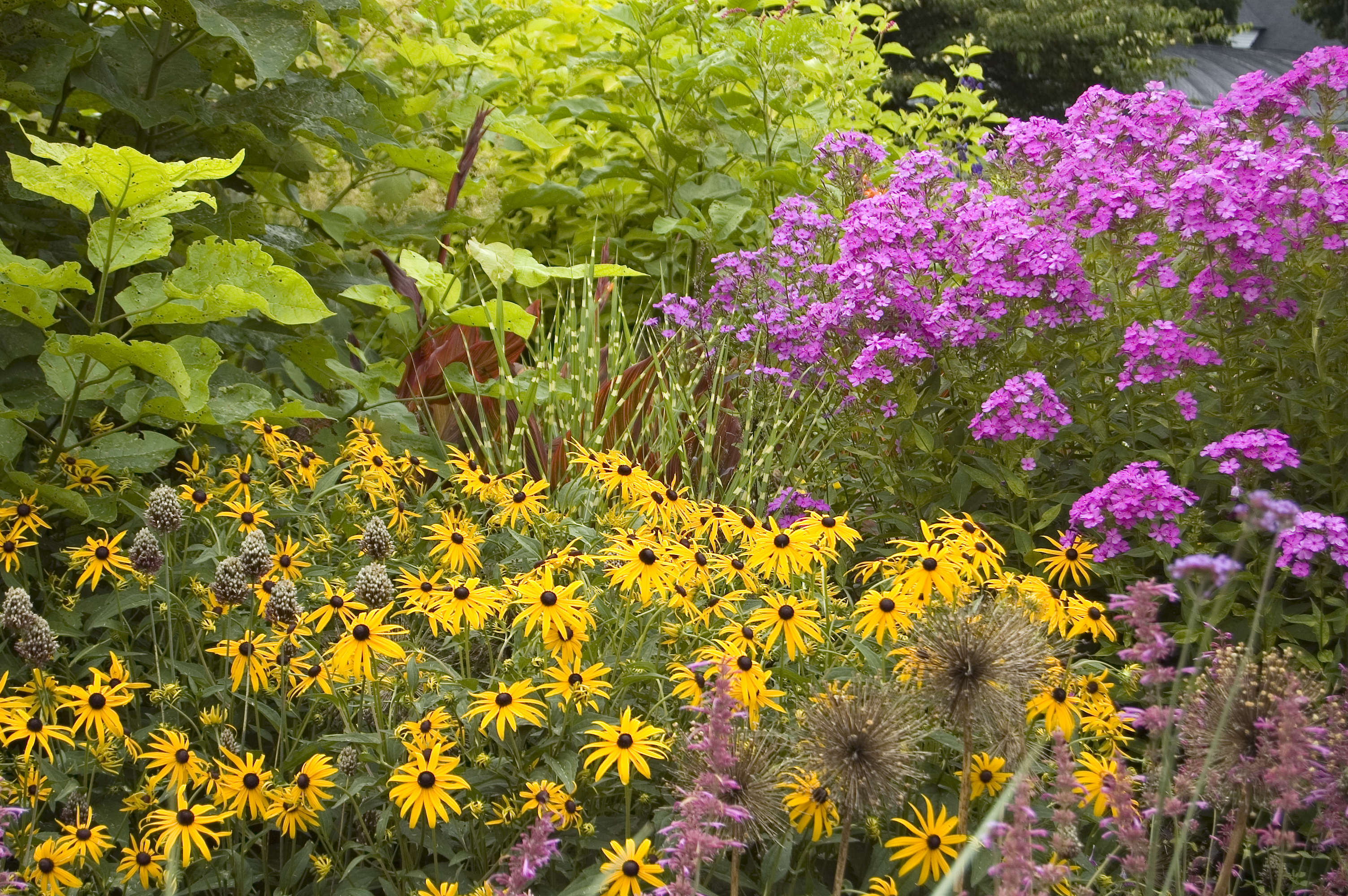 Native Plants For Autumn Interest White Flower Farms Blog