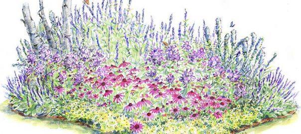 Pollinator Garden for Sun