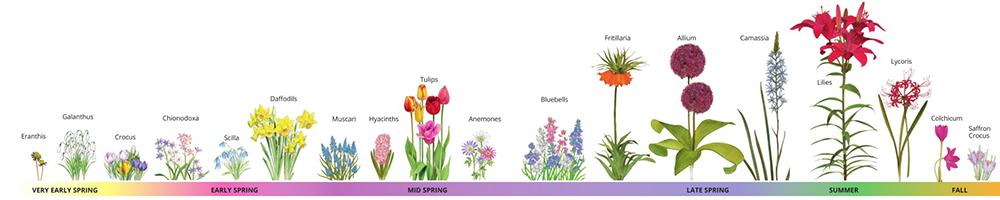 Bulb Bloom Chart
