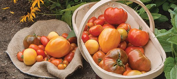 American Heirloom Tomato Collection
