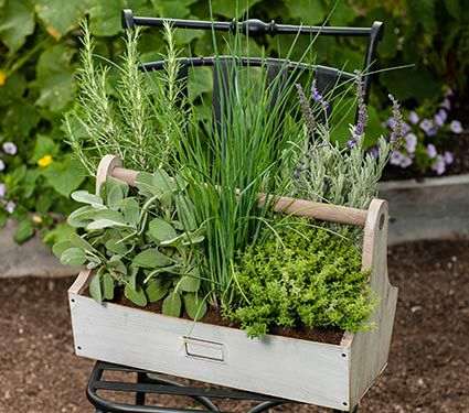 Chefs Compaion Herb Kit With Rustic Tool Box Planter