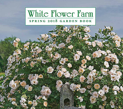 Thank you for calling white flower farm white flower farms blog white flower farm spring 2018 catalog mightylinksfo