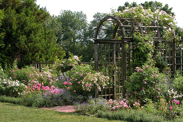 White flower farms blog the most fun is a major revision to our display gardens in morris ct last fall we cleared a large border that for many years featured flowering shrubs mightylinksfo Choice Image