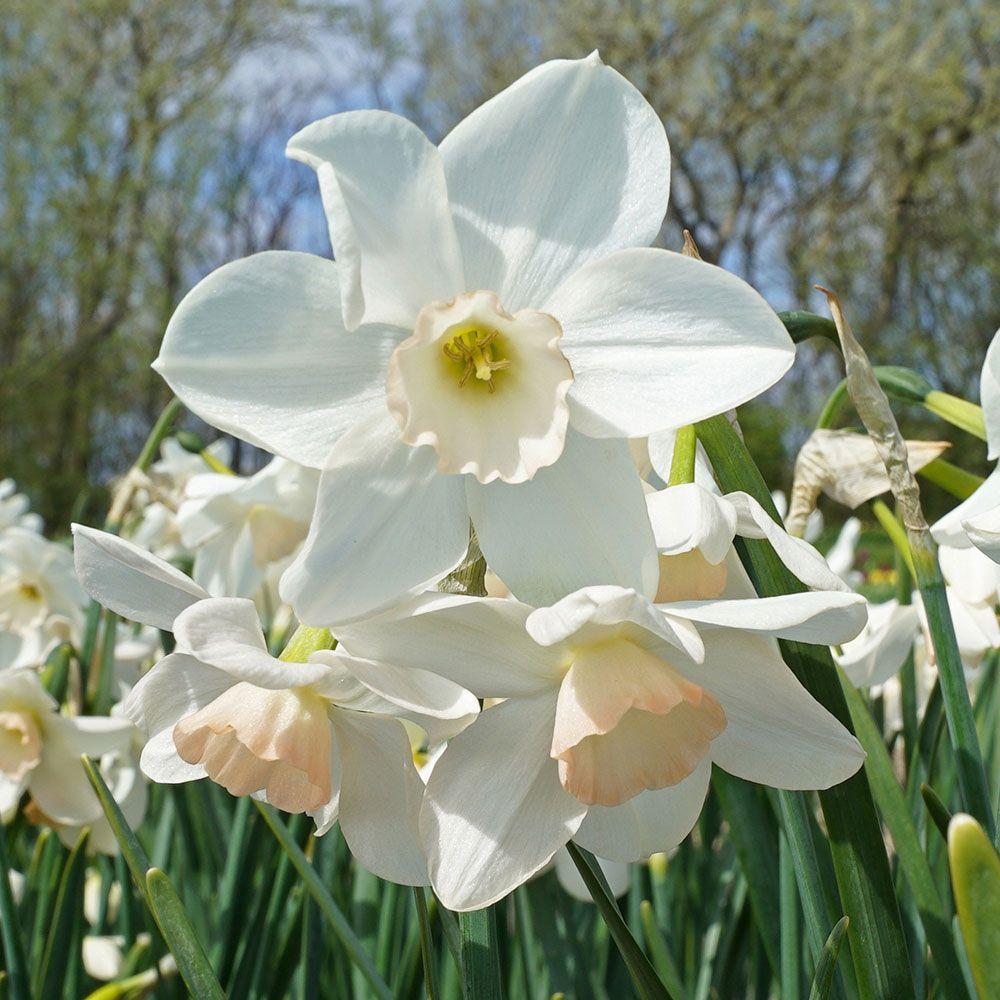 Garden Design White Flower Farms Blog