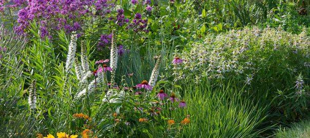 native-plant-garden-20170806-133