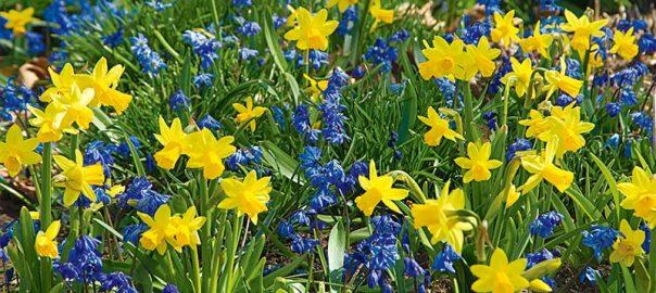 Spring Calvary Collection`