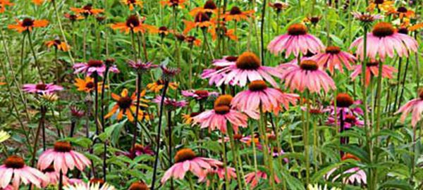 Garden design white flower farms blog page 2 best long bloomers for seasons of color mightylinksfo