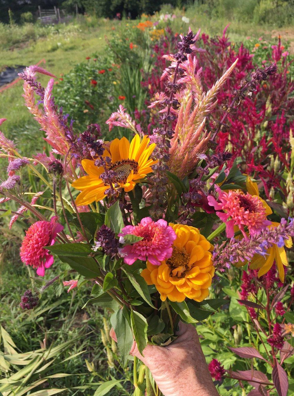 field tips for harvesting cut flowers   white flower farm's blog