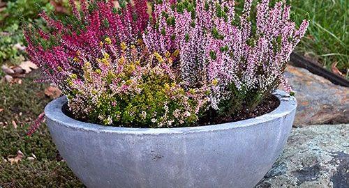 White Flower Farm & Container Gardening   White Flower Farm\u0027s blog