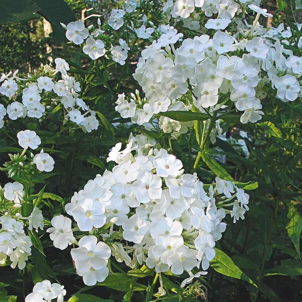 White Flower Farm's blog