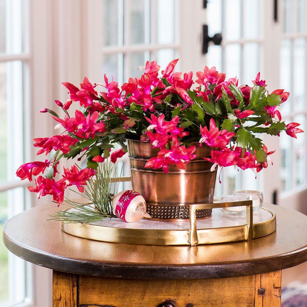всю благоприятные цветы для дома с фотографиями что бывшей