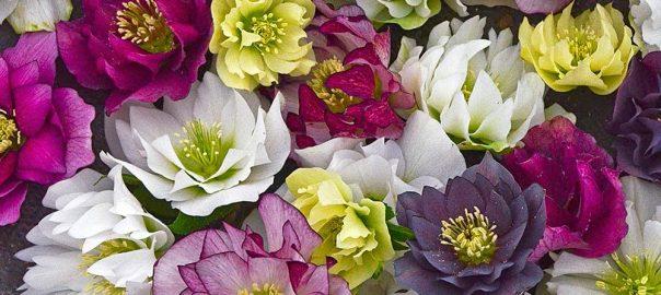 Spring Bloomers White Flower Farm S Blog